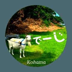 ●沖縄県離島・小浜島の景色にメッセージ●