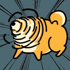 [LINEスタンプ] 動く!むっちりでかわいい柴犬 (1)