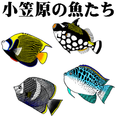 小笠原の魚たち