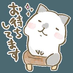 [LINEスタンプ] ねこの毎日使えるスタンプ〜きほんの敬語〜