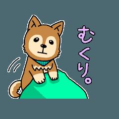 ☆柴犬リクのスタンプ パート2☆