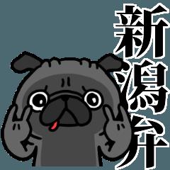 新潟弁 黒パグさん