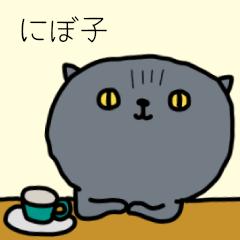 スコティシュフォールド★★★『にぼ子』