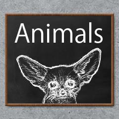 [LINEスタンプ] Blackboard Animals
