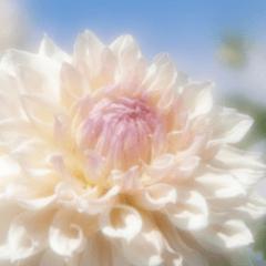 花のたより