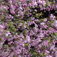 花のたより群生編