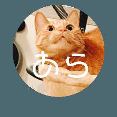 可愛い3匹の猫のスタンプ 相槌とか