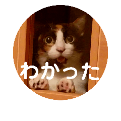 可愛い3匹の猫のスタンプ 相槌とか 2