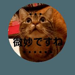 可愛い3匹の猫のスタンプ 相槌とか 3
