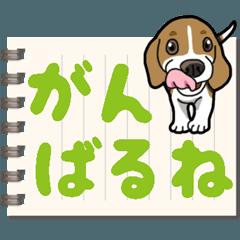[LINEスタンプ] わんこ日和 ビーグル こいぬ vol.8