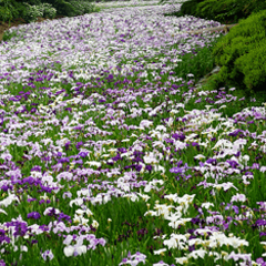花の四季群生編