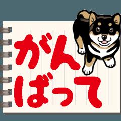 [LINEスタンプ] わんこ日和 黒柴13