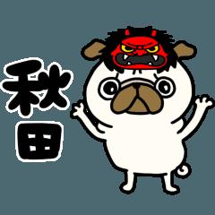 秋田のパグさん