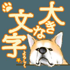 [LINEスタンプ] 秋田犬LOVE 2 (1)