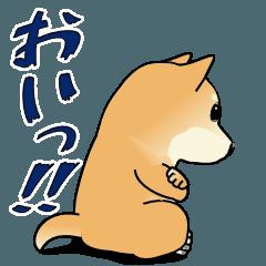 おいっ‼柴犬ショーヘイ