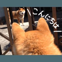 かわいい柴犬スタンプ(1)