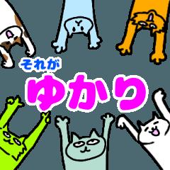 ゆかりという猫たち