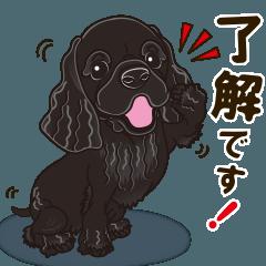 気軽にアメコカ(ブラック) 行動編