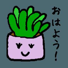 多肉植物のハオちゃん!の挨拶スタンプ