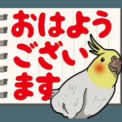 [LINEスタンプ] オカメインコ ピーちゃん Vol.6#デカ文字