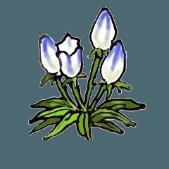 高山植物の花で癒してね  2