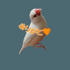 文鳥スタンプ~文鳥ズ ①