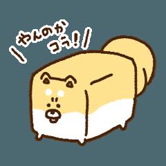 四角い柴犬