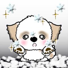 シーズーの冬(クリスマス、お正月) Vol.19