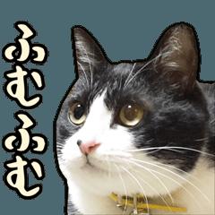 猫のチビ山スタンプ