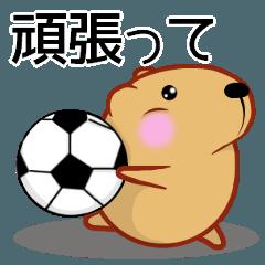 きゃぴばら【サッカー応援】