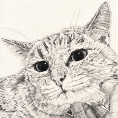 vol 5. 山田猫Ⅰ
