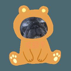 岡田家お犬の日常。