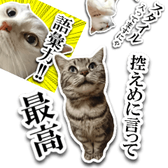 [LINEスタンプ] 控えめに言って最高な猫スタンプ