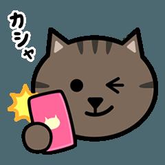 かわいいキジトラ猫の顔