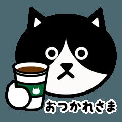 かわいい黒白猫の顔1