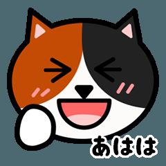 かわいい三毛猫の顔