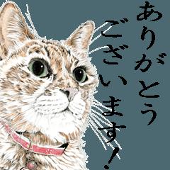 vol. 6 山田猫Ⅱ