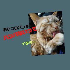ネコのちーちゃん3