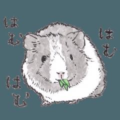 [LINEスタンプ] 愛らしく真面目なモルモットさん 関西弁
