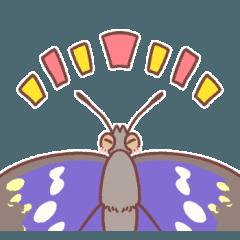 タテハチョウのなかま