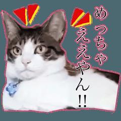 猫のジャスティン。実写版。