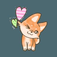 柴犬ちゃんの日常図鑑1