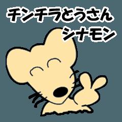 チンチラとうさん(シナモン)