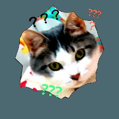 neko猫好き