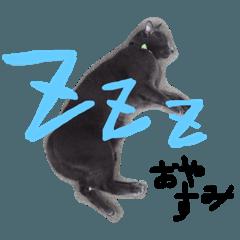 猫のチェルシー  2