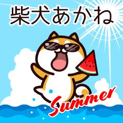 柴犬あかねの夏