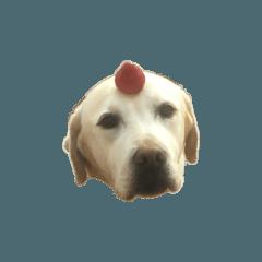ラブラドール 犬 シール 可愛い