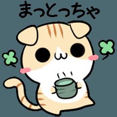 富山弁のねこ3