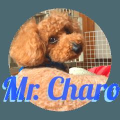 うちの犬チャロ ①
