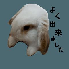 うさぎのまめ吉2